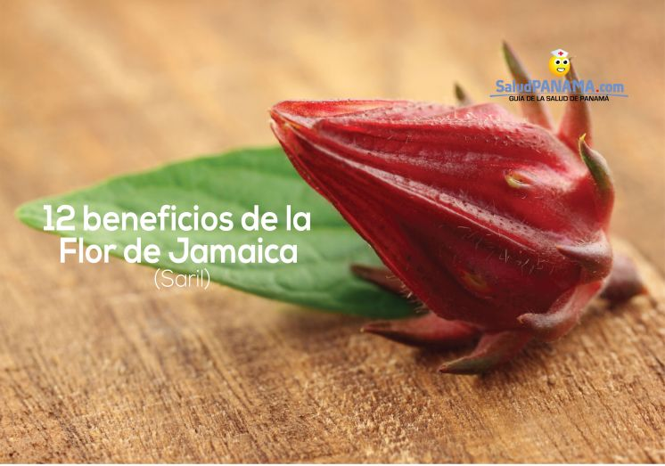 12 beneficios de la Flor de Jamaica (Saril)